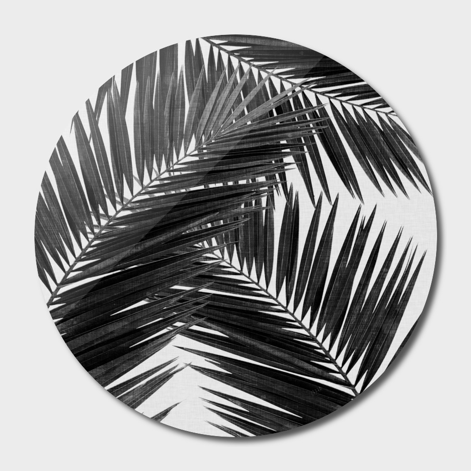 Palm Leaf II BW