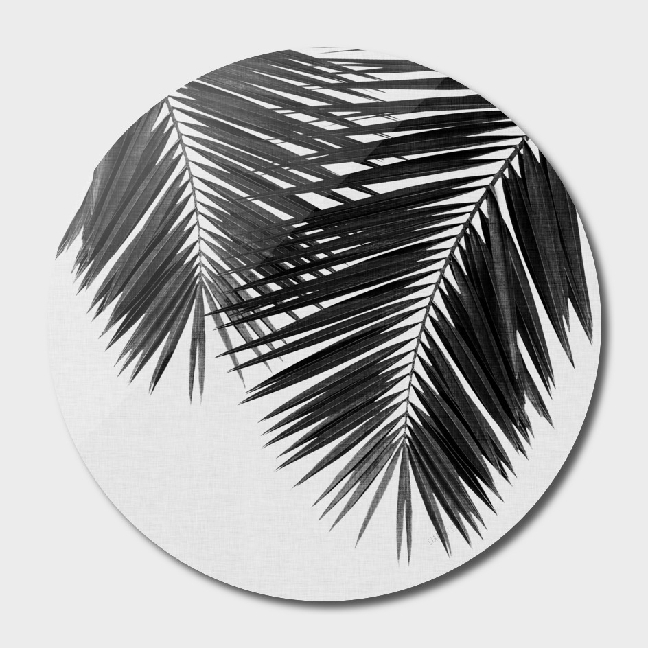 Palm Leaf III BW