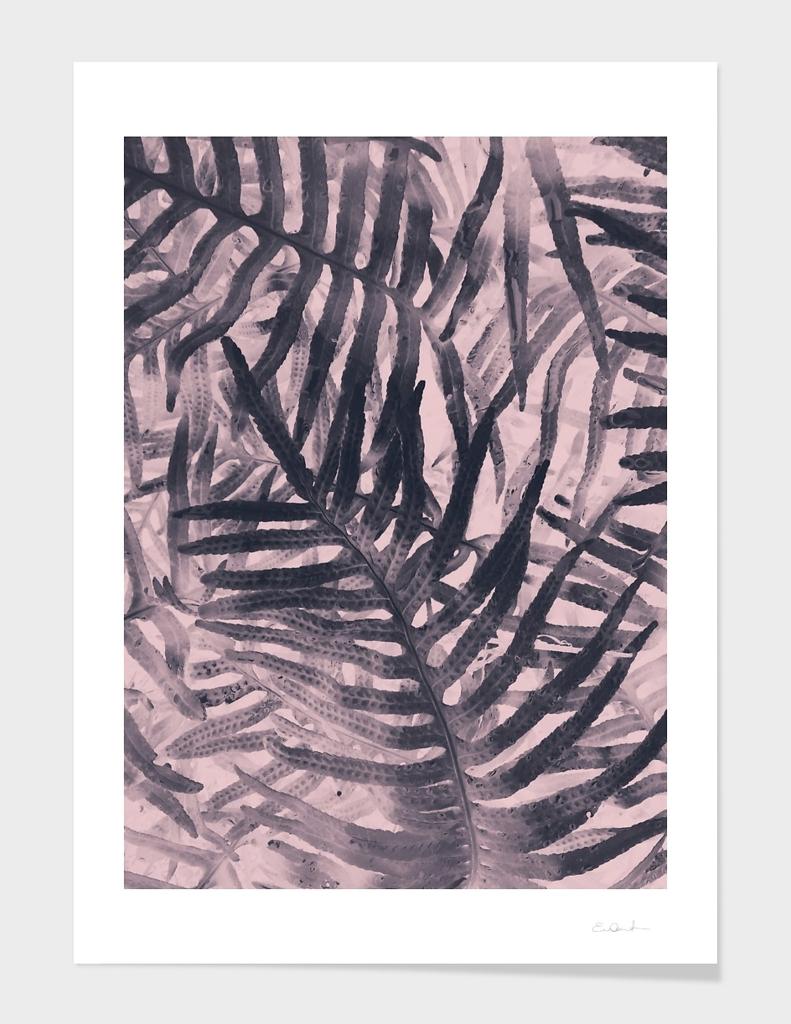 Negative Ferns