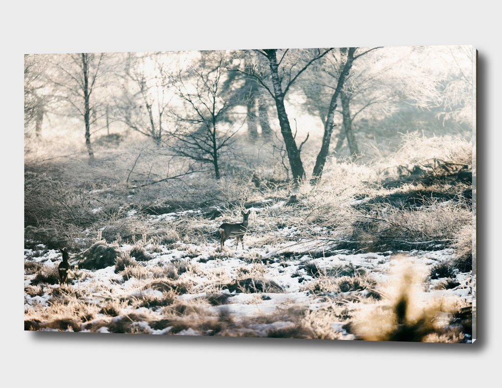 Roe deer in snowy winter landscape
