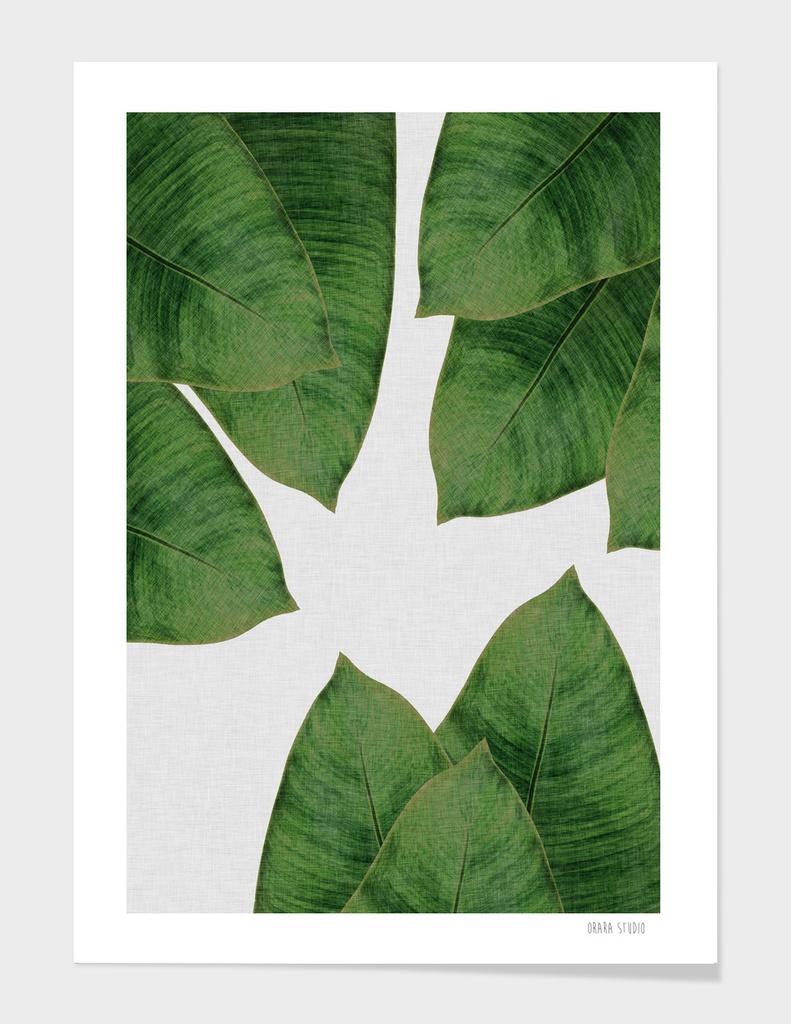 Banana Leaf III