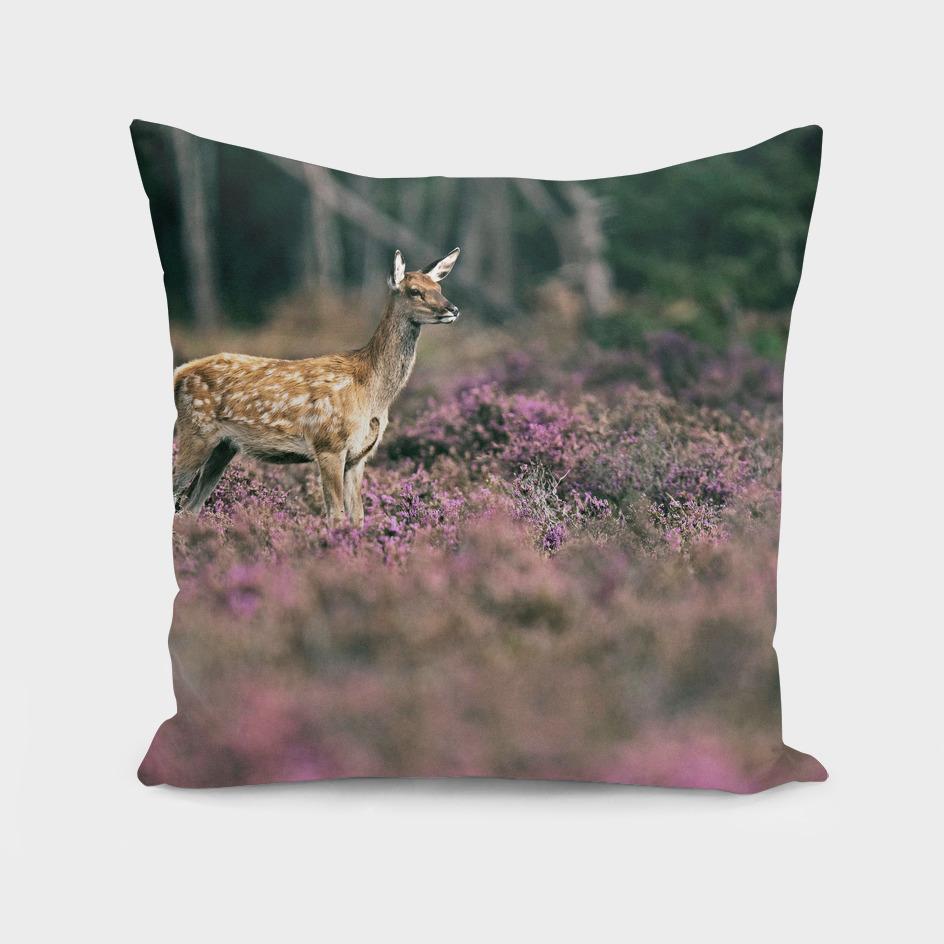 Young red deer in blooming moorland