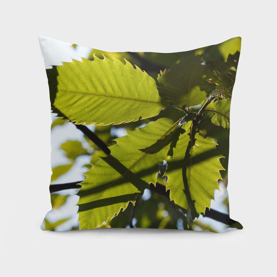 Sunlit leafs