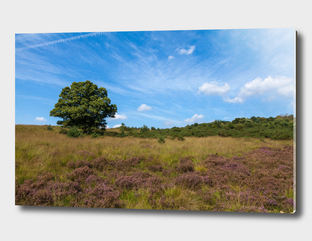 Beautiful landscape at the Veluwe