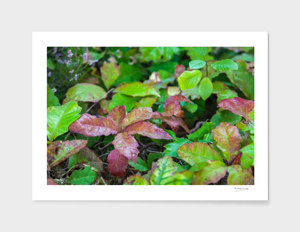 Colourfull autumnleafs