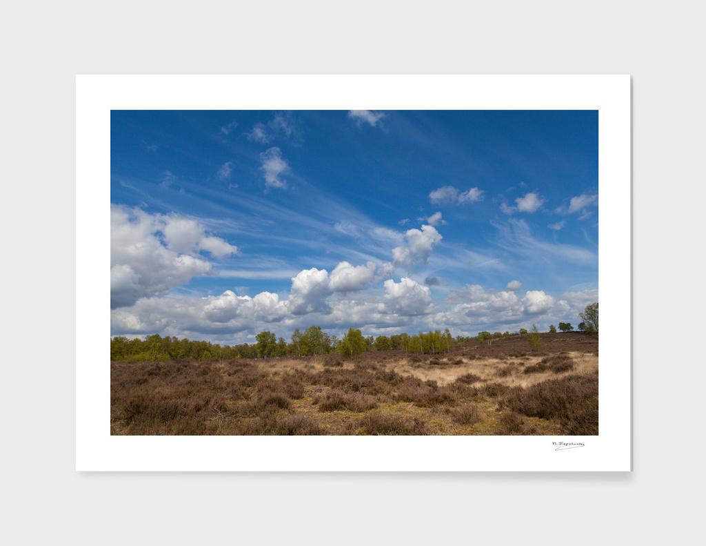 Beautiful landscape at Deelerwoud