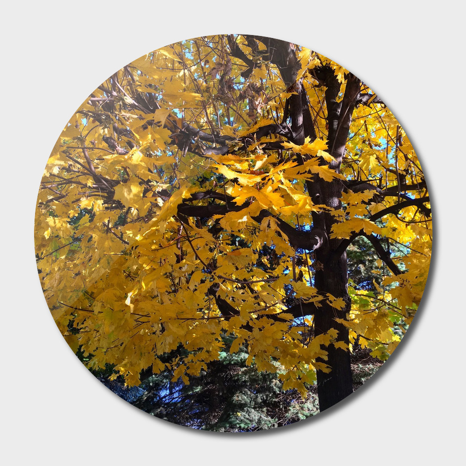 Mapple leafs