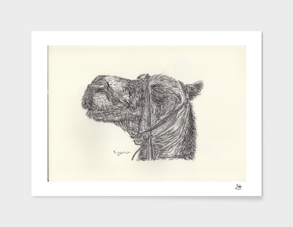 CAMEL010
