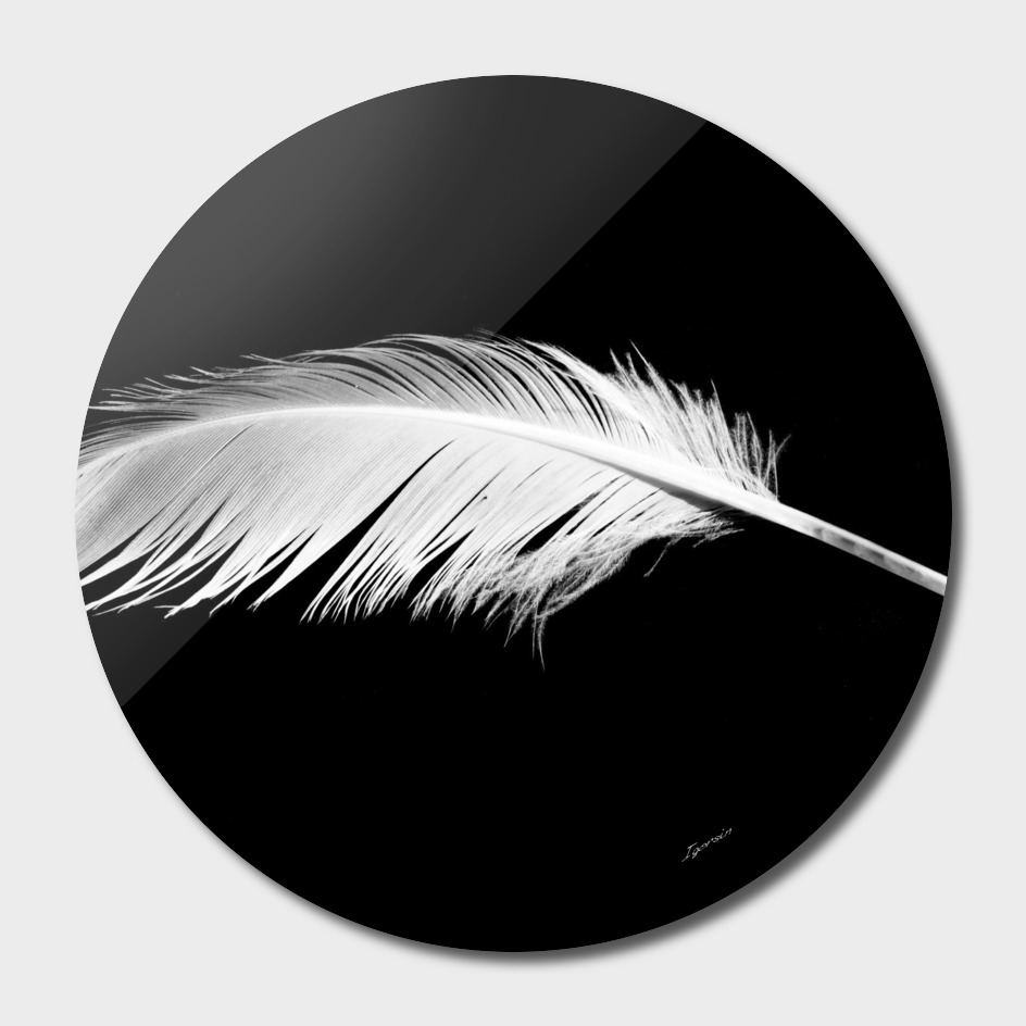 Birdy white feather