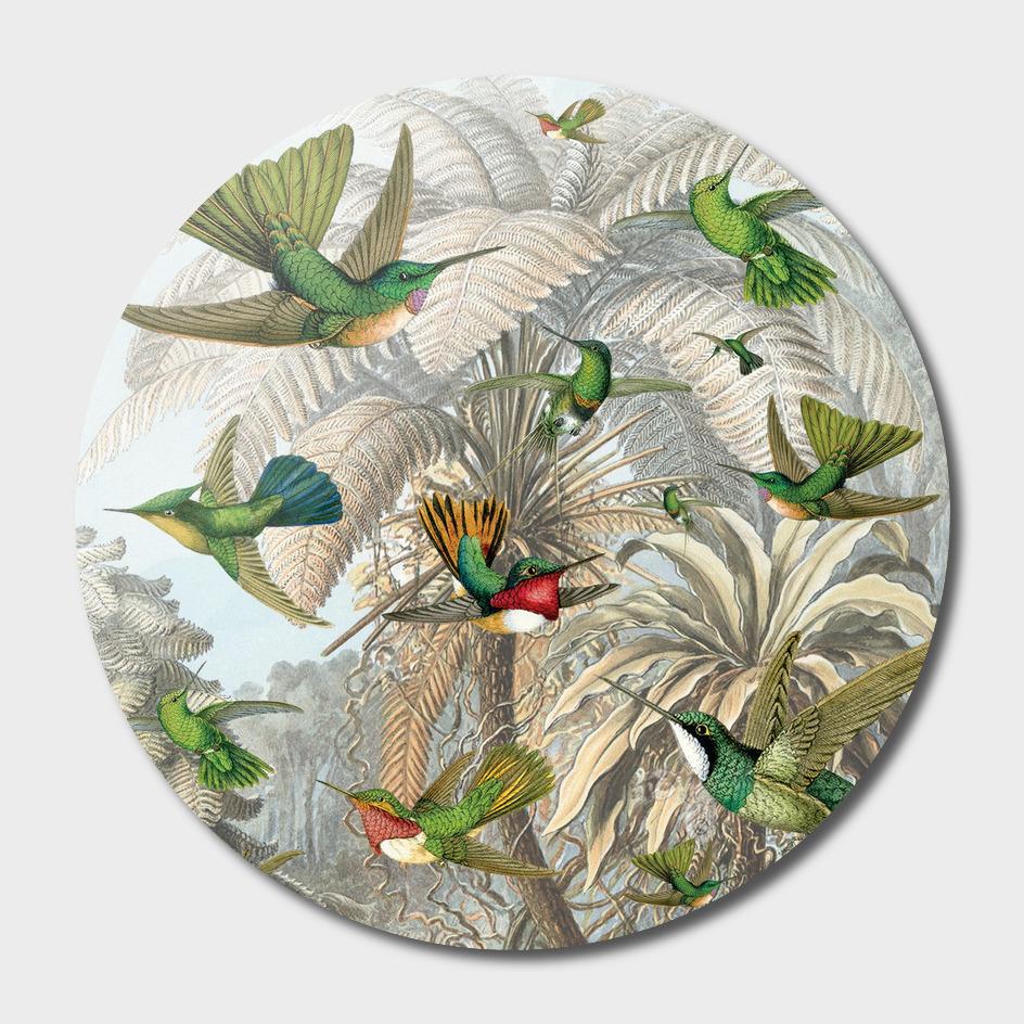 botanical garden and hummingbird