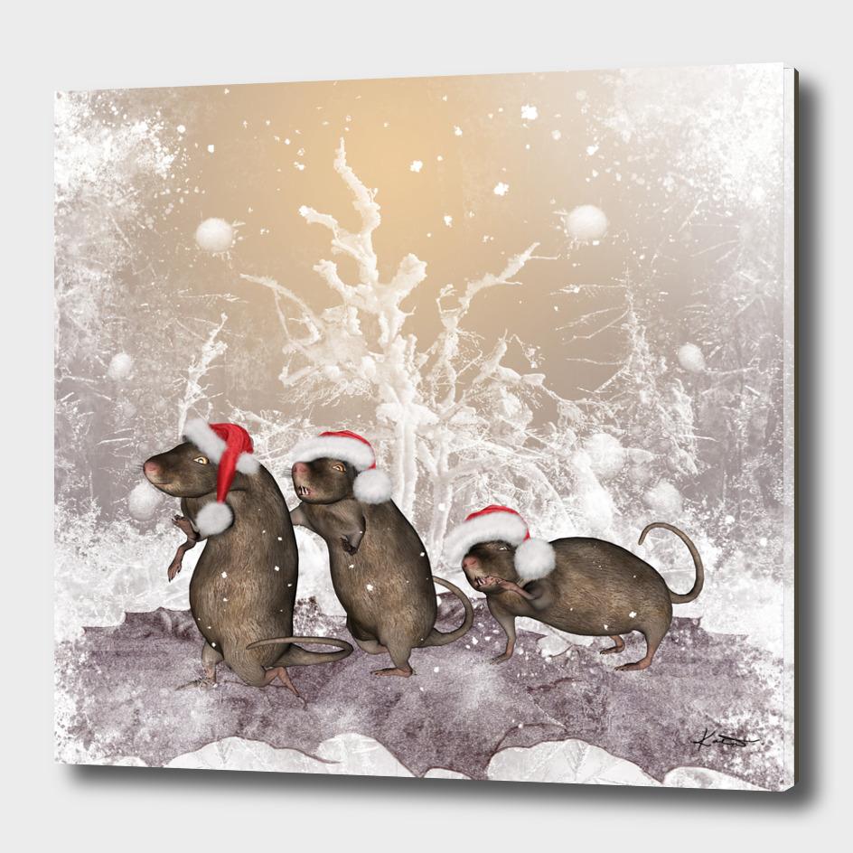 Funny christmas rats