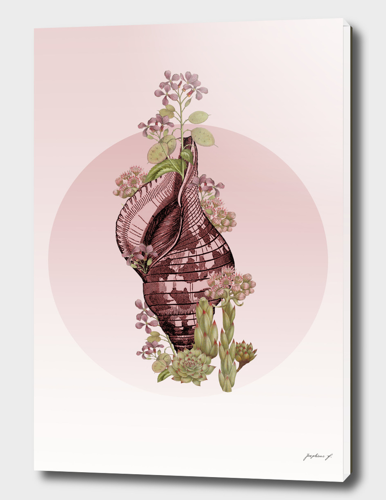 Seashell and flowers