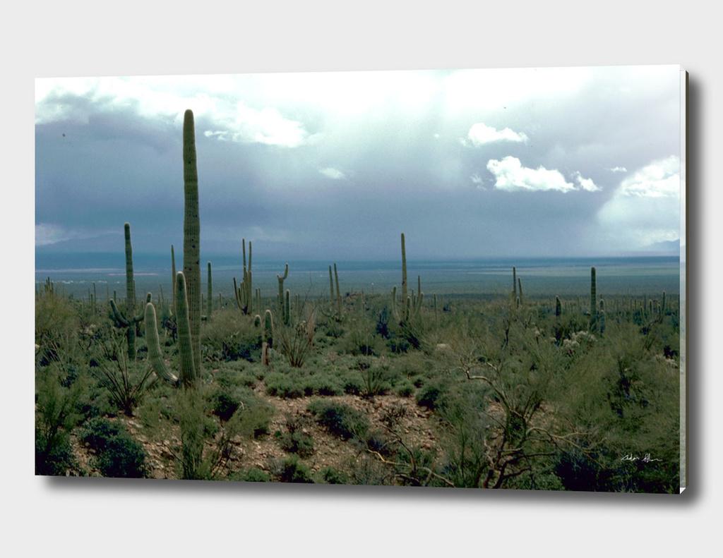 Arizona Desert with Cactus Photograph