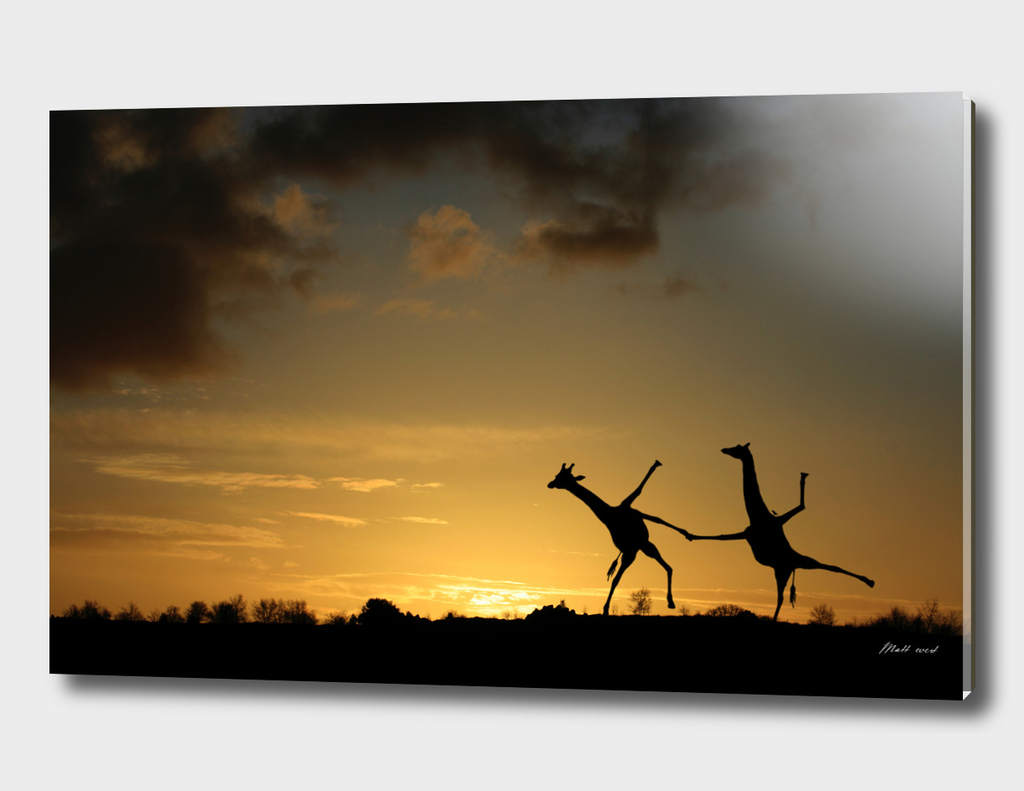 Happy Dancing Giraffes