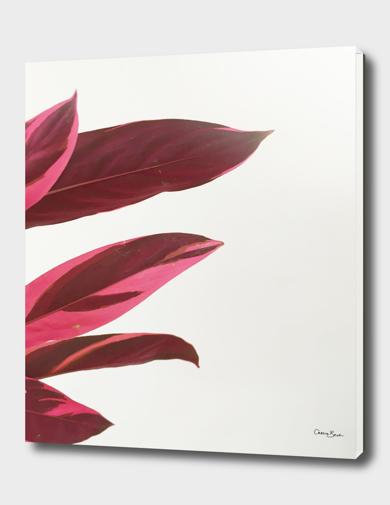 Red Leaves I