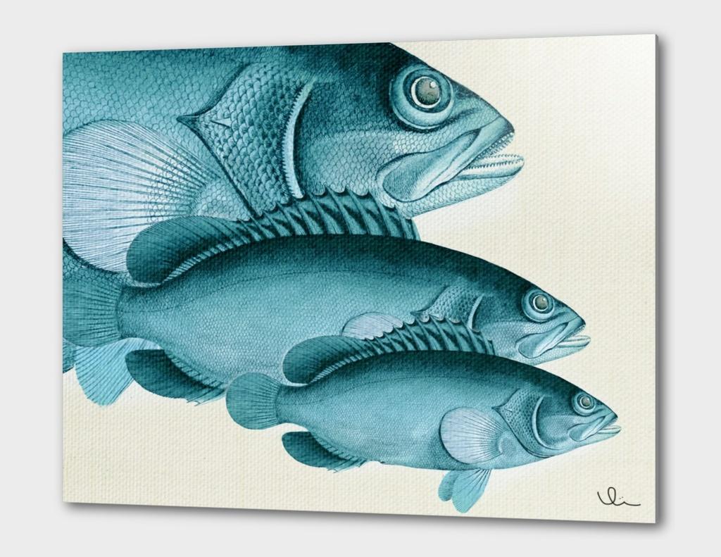 Fish Classic Designs