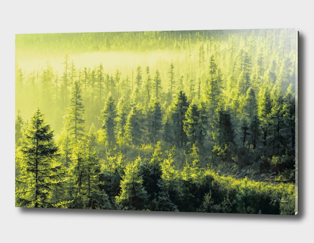 Forests Oil painting
