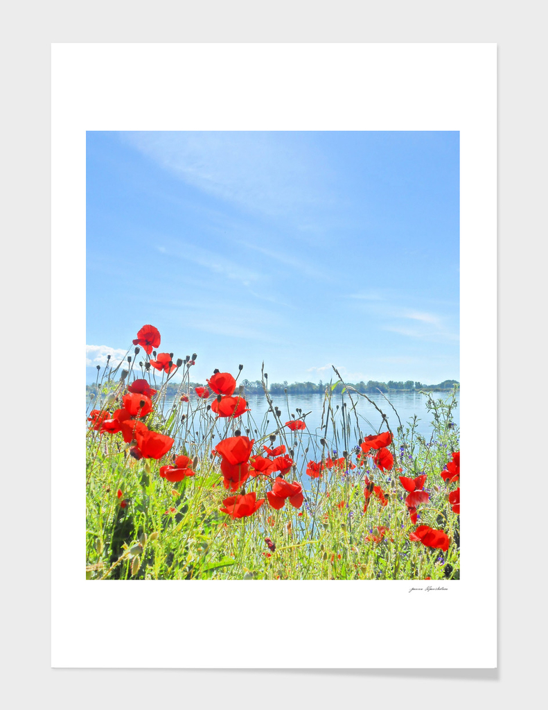 Poppies On The Lake