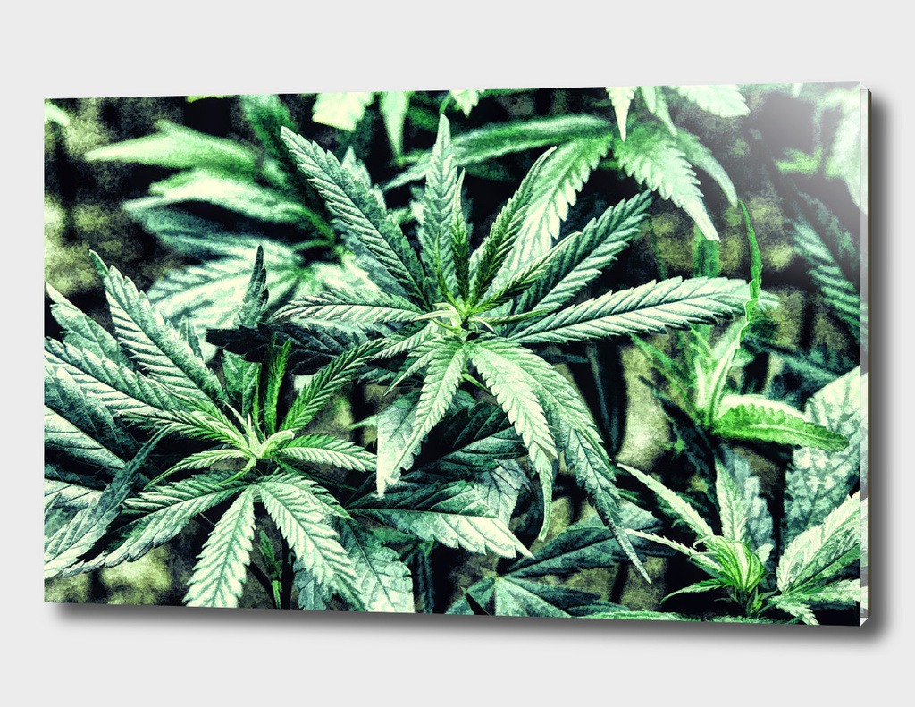 Cannabis Oil painting