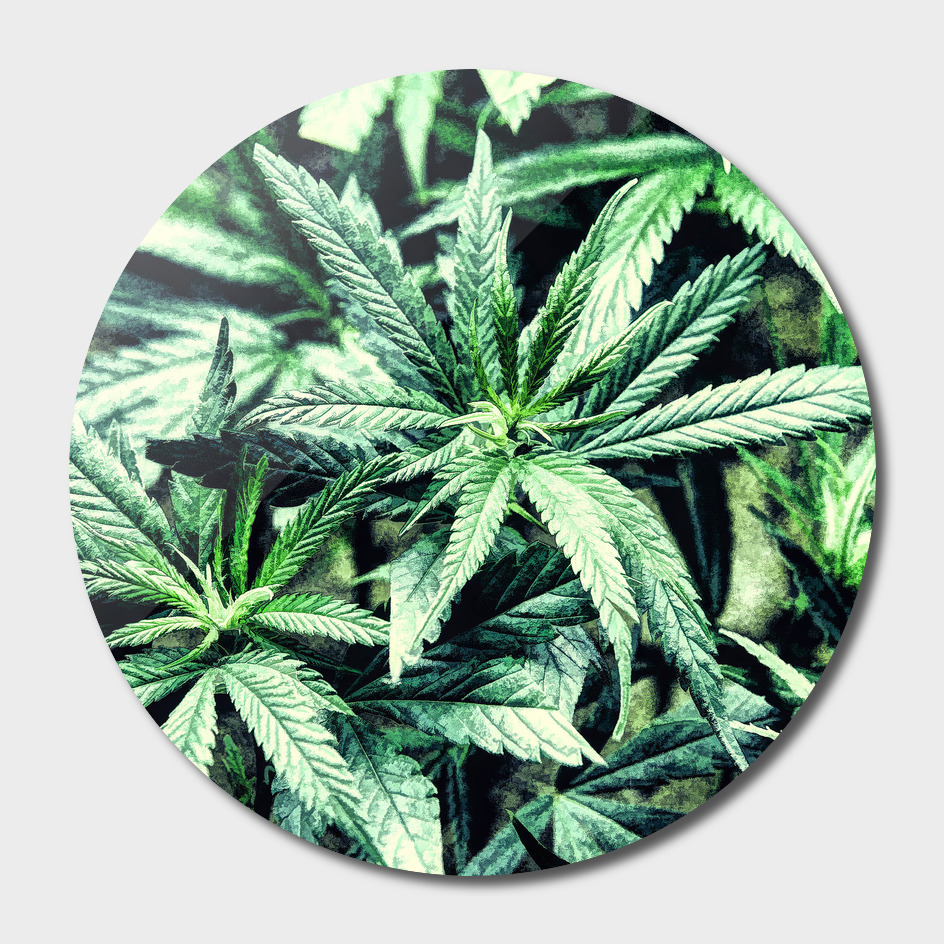 Cannabis Oil painting