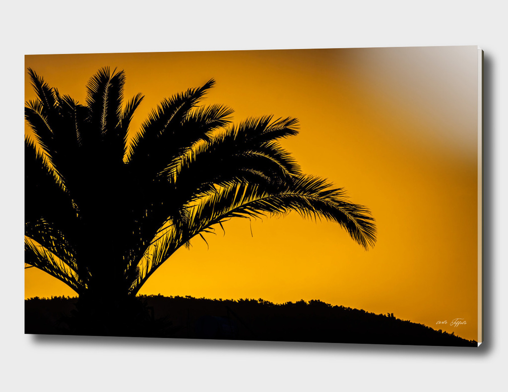 Palmtree in backlight in turkish sunset
