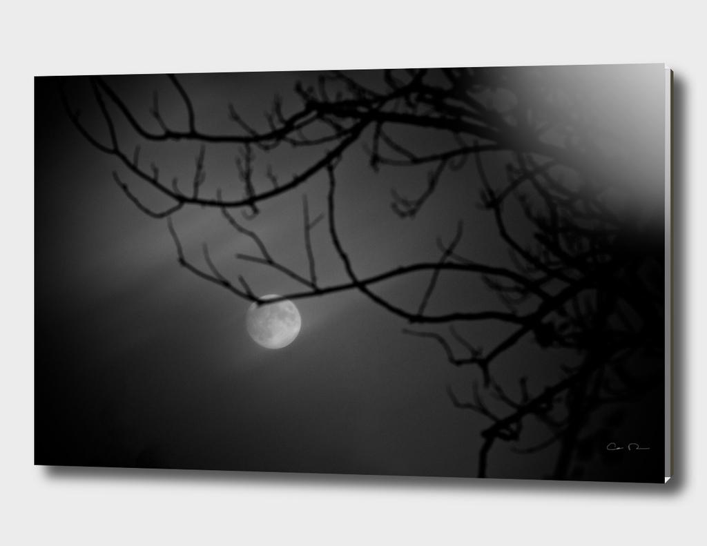 Brushing Moon