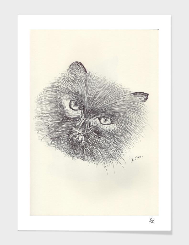 BALLPEN CAT 10