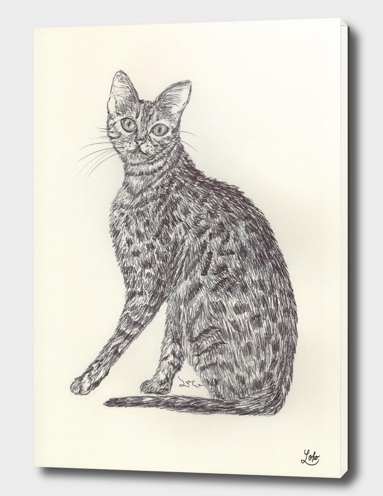 BALLPEN CAT 7