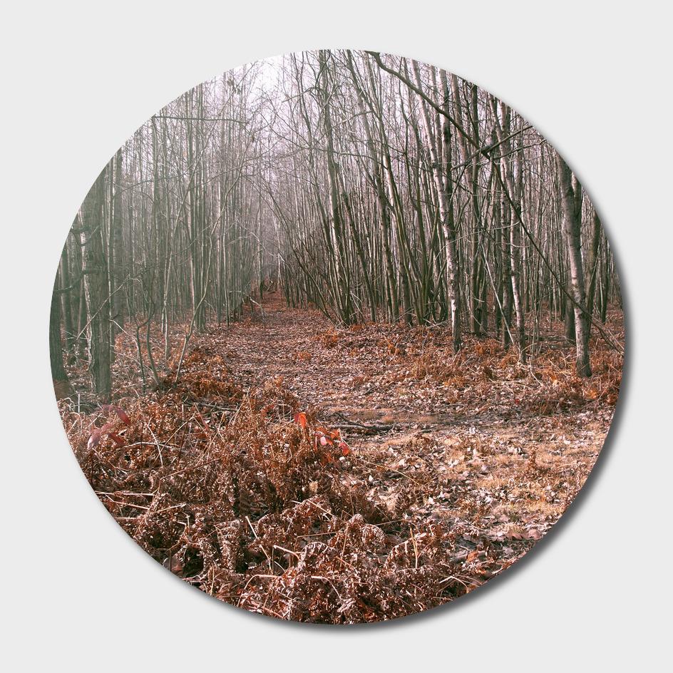 Crunchy Path