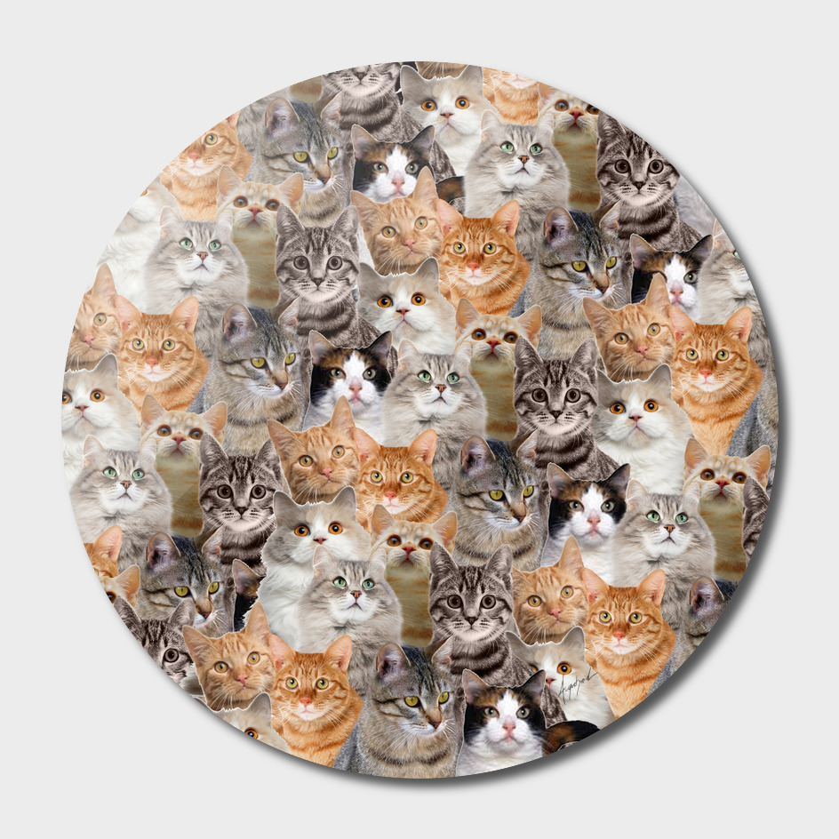 cats pattern lot of funny animals cheesy crazy