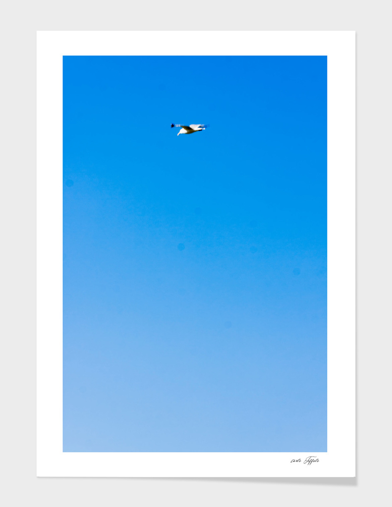 Seagul in the blue sky
