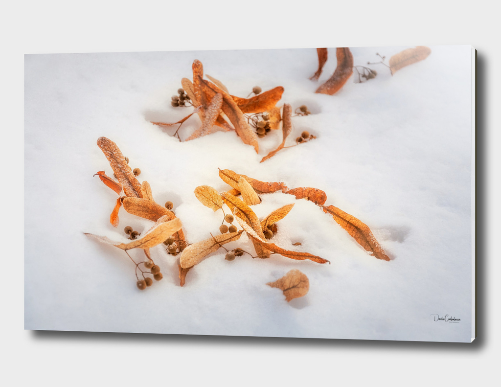 Beautiful golden leaves in the snow postcard
