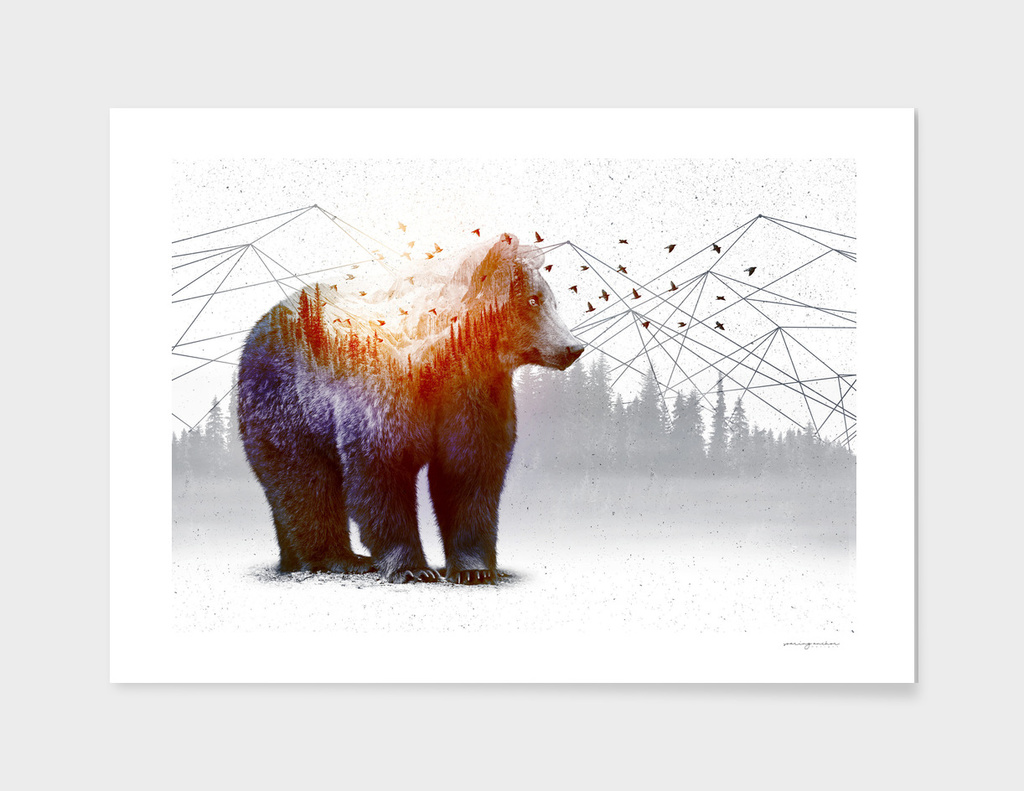 A WildernessWithin | Bear
