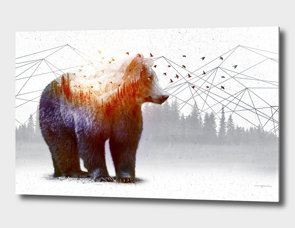 A WildernessWithin | Bear
