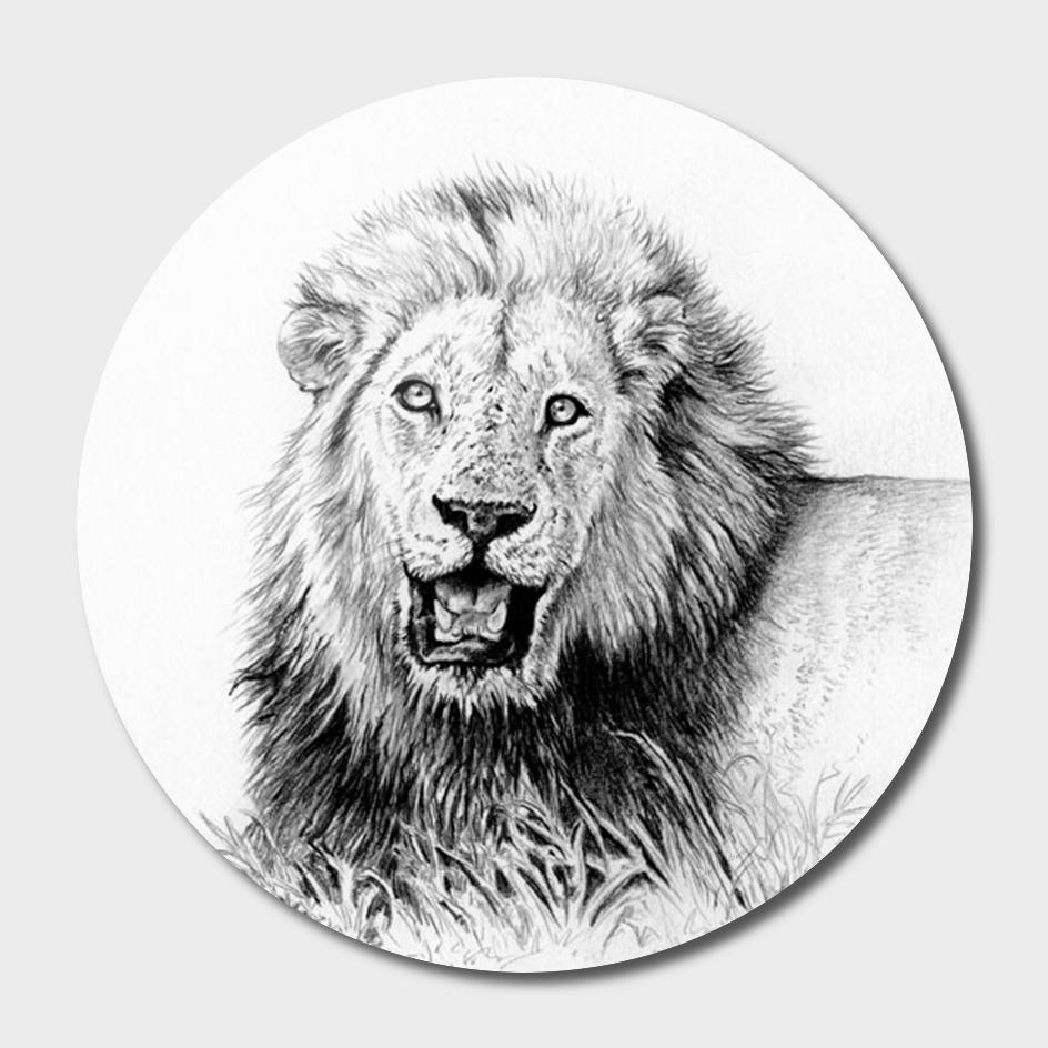 Lion Wildlife Art and Illustration pencil