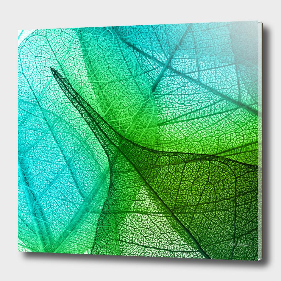 Sunlight Filtering Through Transparent Leaves Green