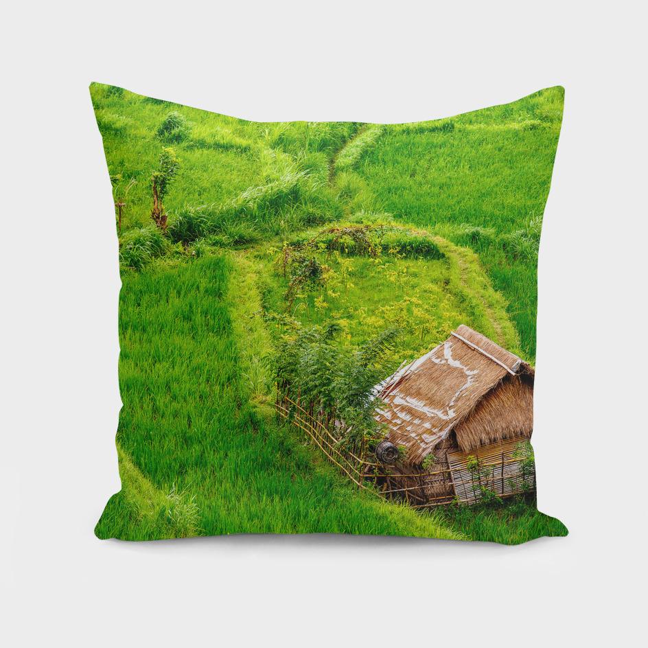 Ricefield hut