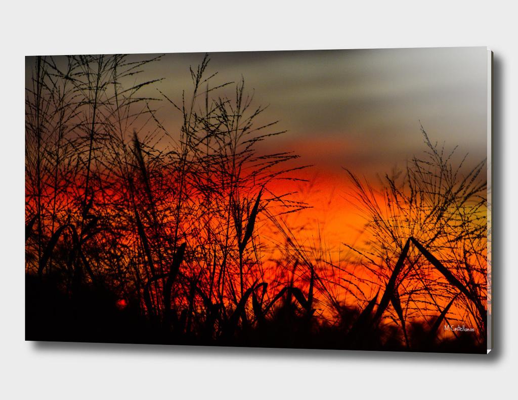 Orange sunset Cancun