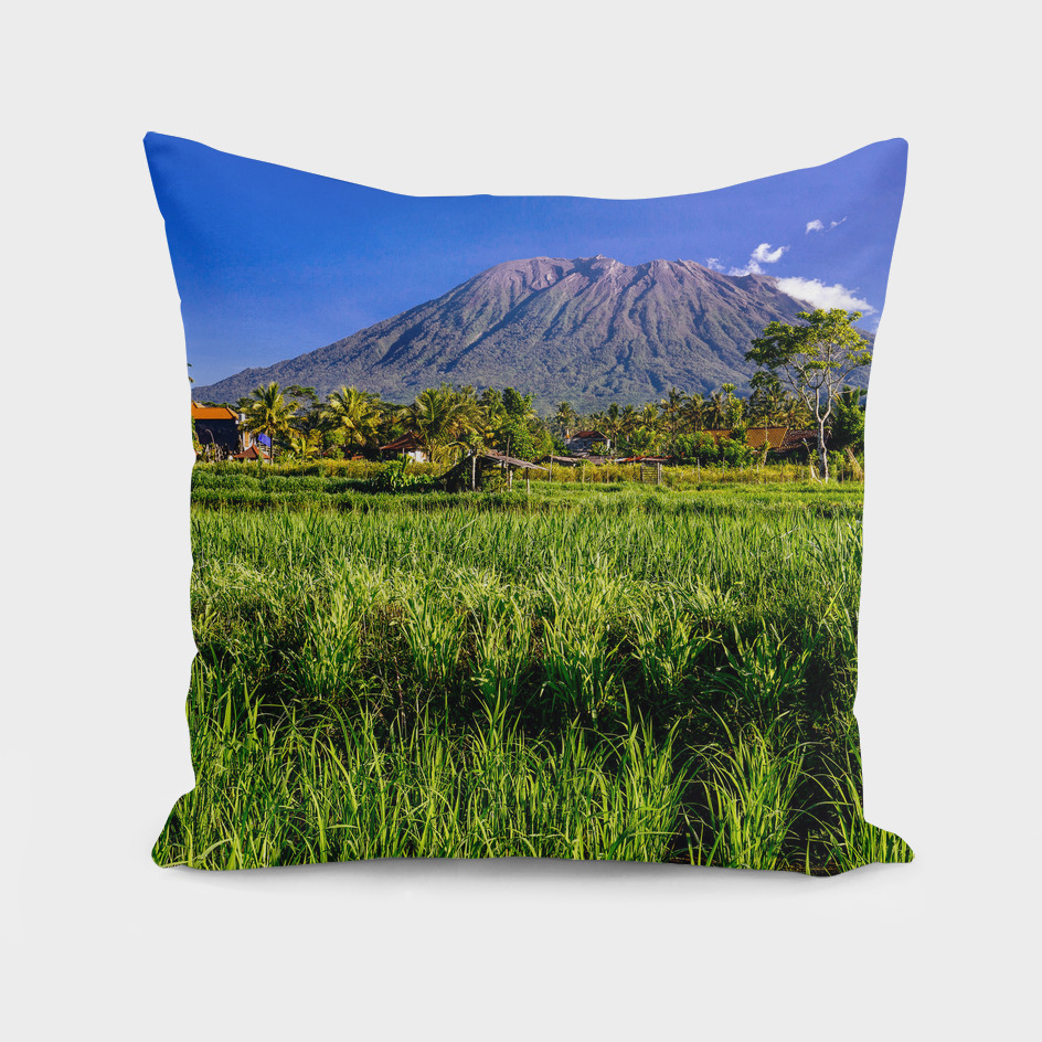 Volcano and ricefield