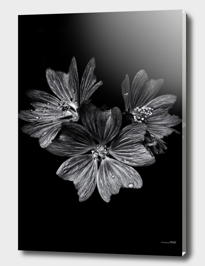 Backyard Flowers In Black And White 11