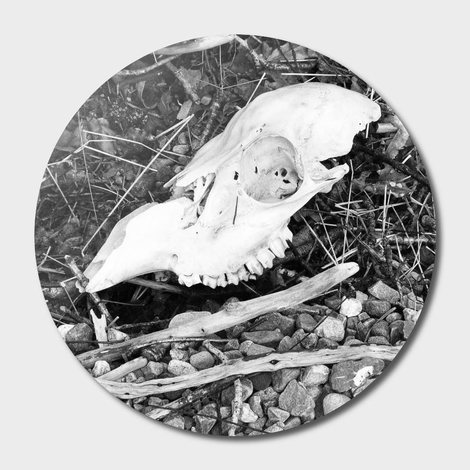 Skull on Loch