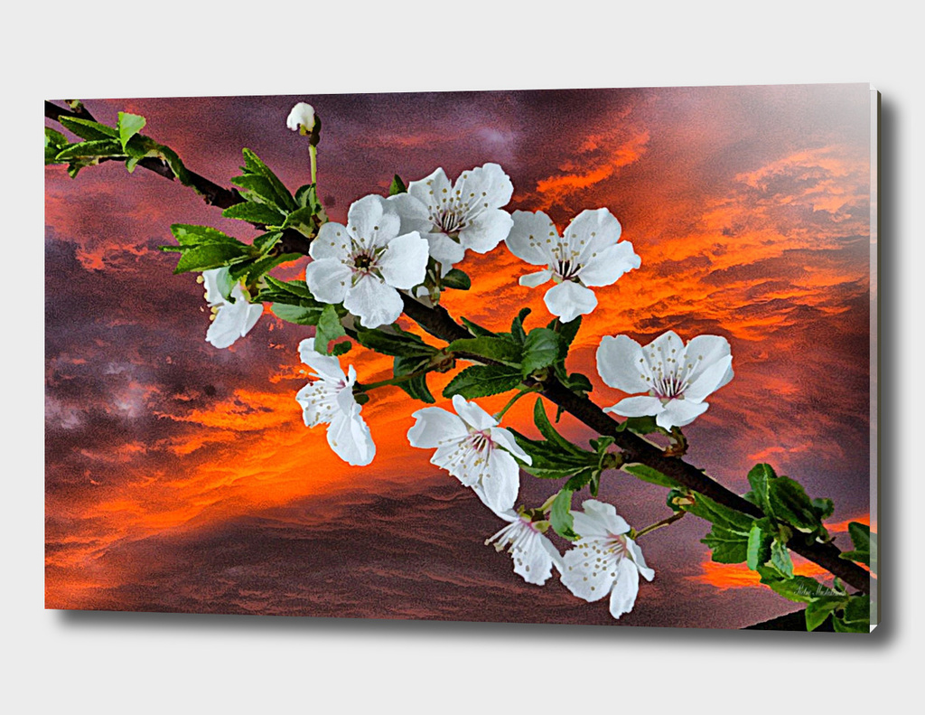 Blossoms spring art photo art