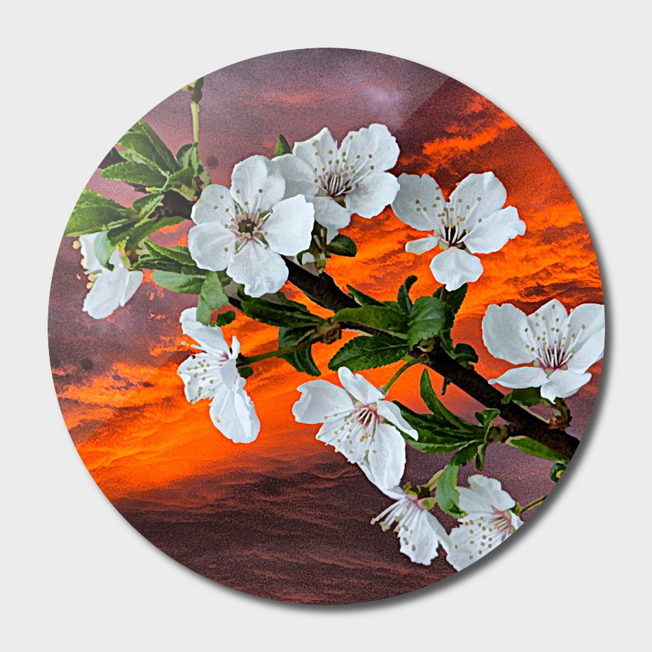 Blossoms spring art photo art