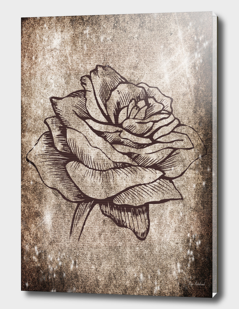 rose background flower blossom