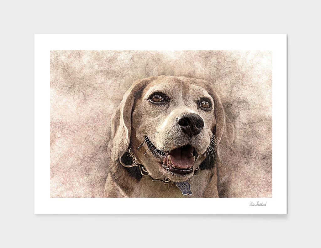 dog pet art abstract vintage