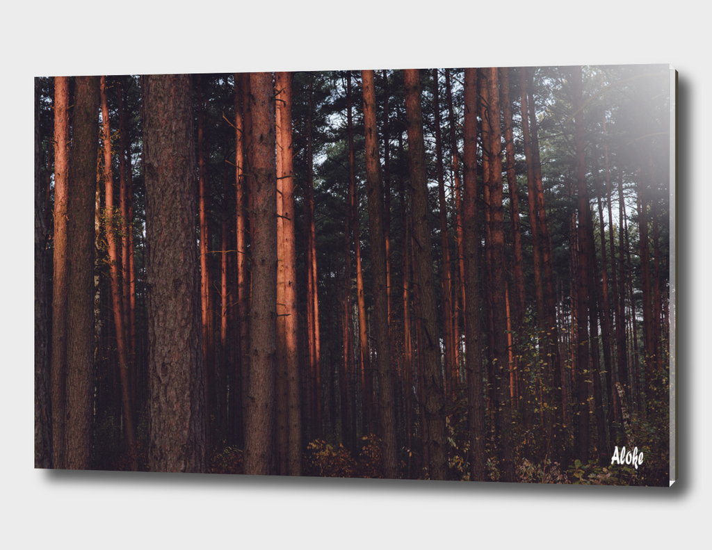 Forest 12