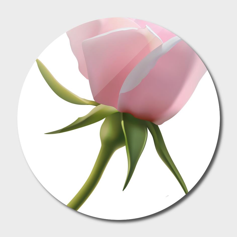 Beautiful_Pink_Rose_Bud