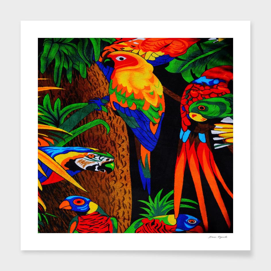 parrots aras lori parakeet birds