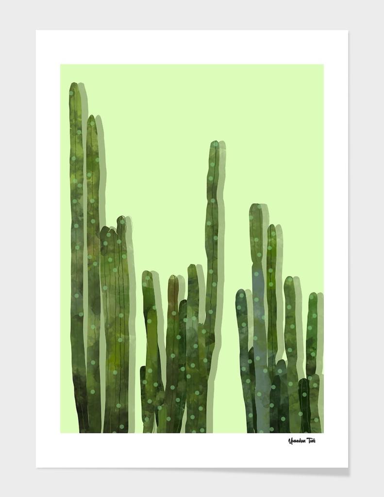 Point Cactus