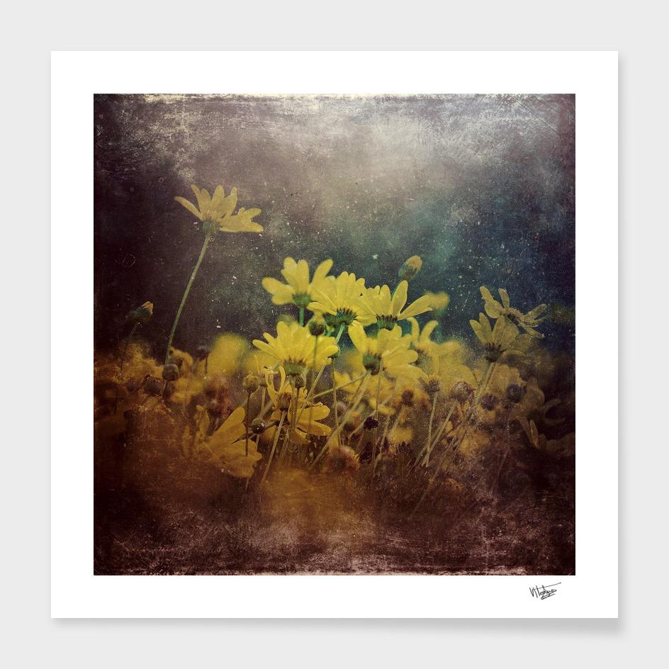 Abstract Yellow daisies